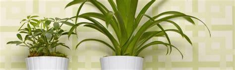 cuidado plantas interior plantas de interior