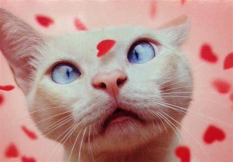 happy valentines day cat cat friday happy meow lentine s day bloglander