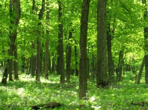 big woods images