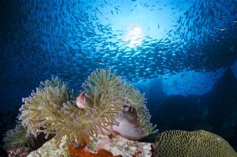 dive in koh tao koh tao diving dive rock