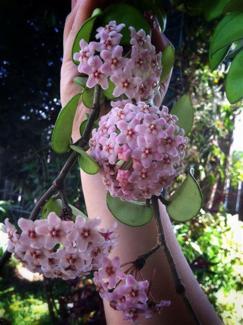 3130 best images about porcelanowy kwiat czyli moje 3131 best porcelanowy kwiat czyli moje hoye images on