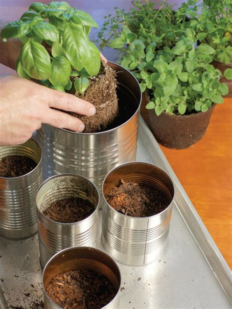 countertop herb garden grow your own kitchen countertop herb garden hgtv