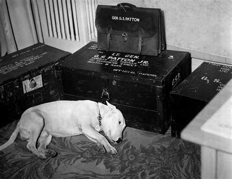 george s dogs general george s patton s on the day of patton s on december 21st 1945