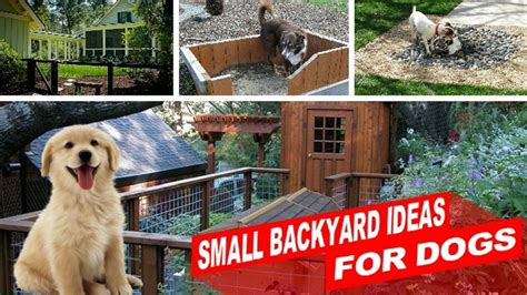 backyard ideas for dogs amazing small backyard ideas for dogs