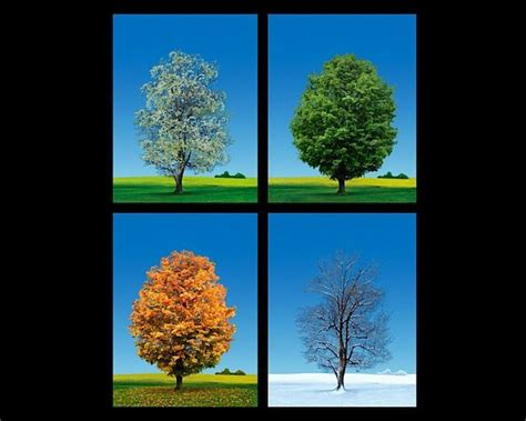 tree seasons come seasons 1848691815 4 seasons trees studio macbeth living beauty trees