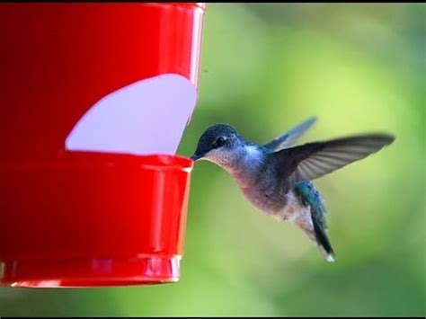 how to make a cheap hummingbird feeder youtube