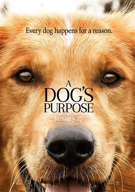dogs purpose controversy best 25 a dogs purpose ideas on
