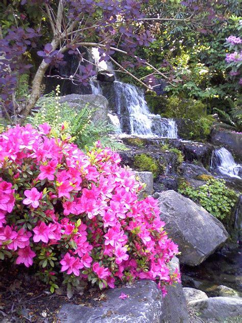 patio rhododendron rhododendron garden ideas modern home exteriors