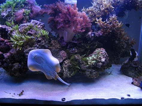 saltwater aquascaping ideas raised reef and aquascaping ideas aquascaping pinterest