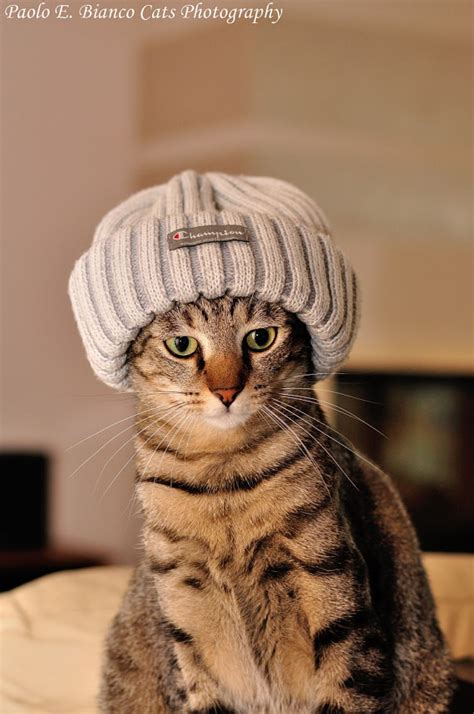 cat in hat 19 adorable pictures of cats in hats