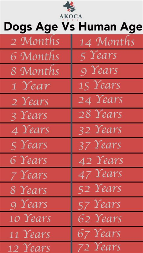 how many years is 1 human year years vs human years akoca pets