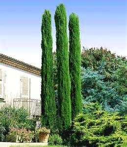 gartengestaltung mit zypressen echte toskana s 228 ulen zypresse heckenpflanzen bei