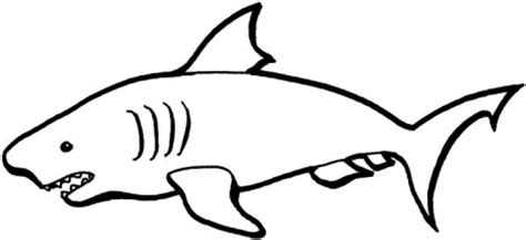 shark outline coloring page shark outline drawing clipart best