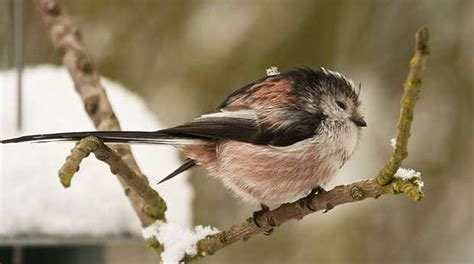 how birds keep warm in winter british bird lovers