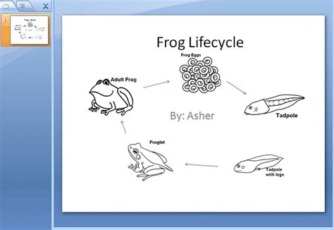 frog life cycle powerpoint k 5 computer lab technology