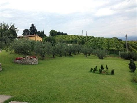 giardini con ulivi il giardino con ulivi e viti picture of tamburino sardo