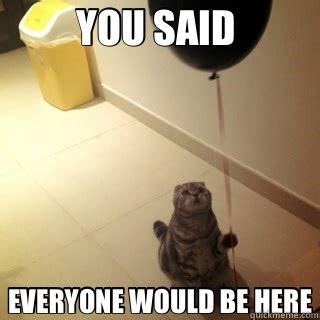 Fuck You Cat Meme - sad birthday cat adviceanimals