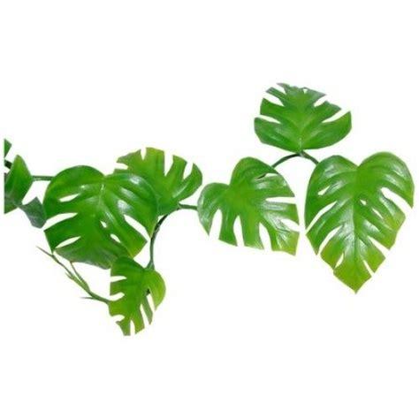 jungle plant clip art clipart free download clip art library