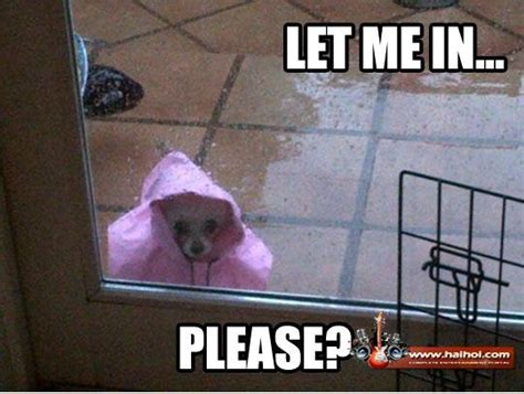 Funny Rain Memes - funny rainy day home videos galleries pictures sms jokes