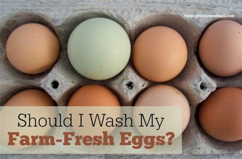 Backyard Chickens Washing Eggs 1000 Images About Chickens Oh My On Organic