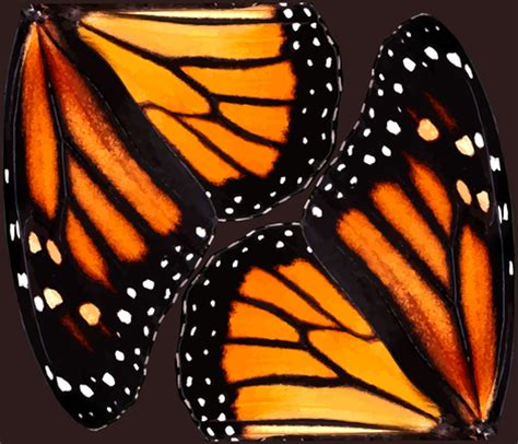 monarch design orange monarch butterfly wings wallpaper bonnie phantasm