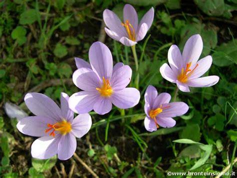 fiore di bosco bronte insieme galleria fotografica i boschi fiori di