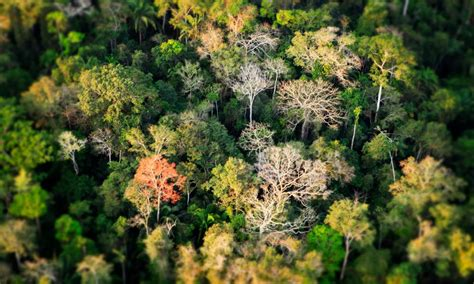 can you buy plants on amazon the amazon wwf