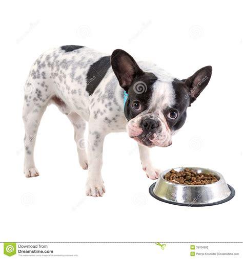 bulldog puppy food bulldog food stock photography image 35704502