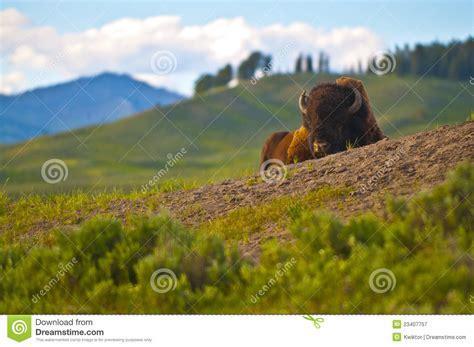 yellowstone landscape yellowstone landscape royalty free stock photography image 23407757