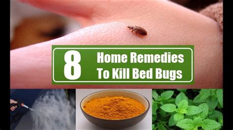 8 home remedies to kill bed bugs how to kill bed bugs