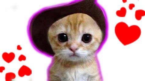 imagenes que se mueven gatos gatitos tiernos enamorados youtube