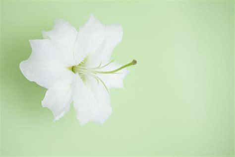 Powerpoint Background Designs Nice Flower Lily Themes Flower Backgrounds For Powerpoint Www Pixshark
