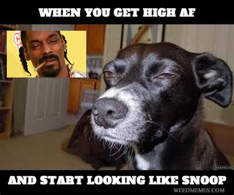 Stoned Dogs Meme - high af look like snoop dogg weed memes