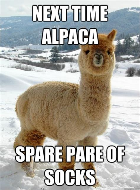 next time alpaca spare pare of socks