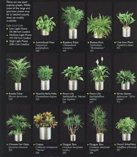 good plants for office office plants interior plants and plants on pinterest