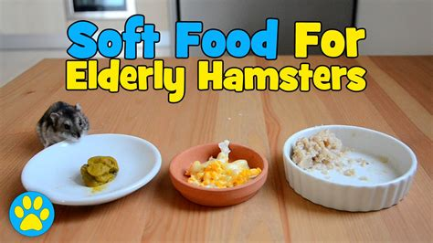 best soft food 3 soft foods for elderly hamsters best of