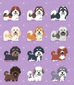havanese colors havanese color guide royal flush havanese