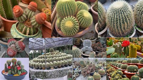 cactus garden ideas awesome cactus garden ideas 78 by house plan with cactus