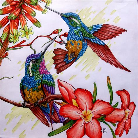 imagenes de casitas y bebedero p colibri con botellas descartables colibries por darthbull dibujando