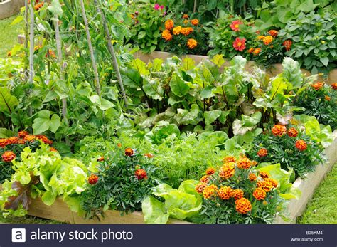 Flower And Vegetable Garden Summer Garden With Mixed Vegetable And Flower Potager Style Raised Stock Photo 19179556 Alamy