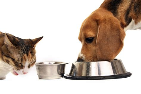 My Pet what s the best amount of food to prevent obesity in my pet
