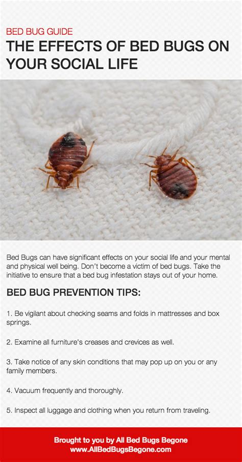 side effects of bed bug bites side effects of bed bug bites 28 images beggars