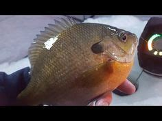 spring crappie bluegill fishing awesome weekend  mn