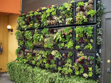vertical wall gardening bringing back the hanging gardens of babylon indoor