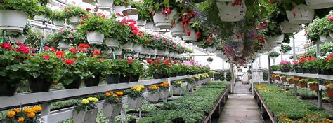 kelowna plants flowers garden supplies   greenery