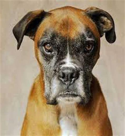 do dogs get jealous do dogs get jealous the pet product guru