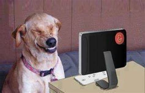 Dog Laughing Meme - pin funny laughing animal pictures amazing creatures on