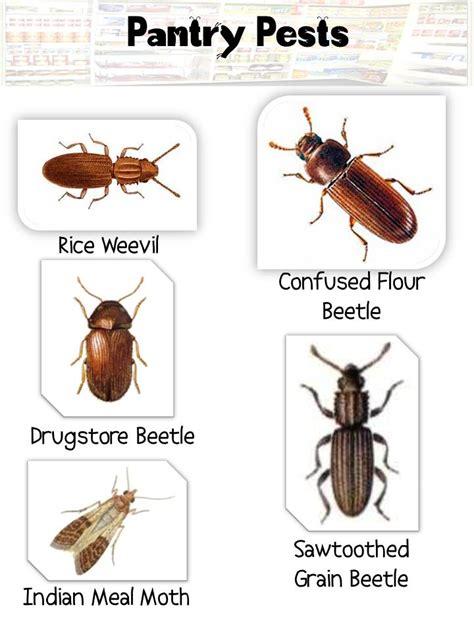 tips  preventing  meal moth infestation