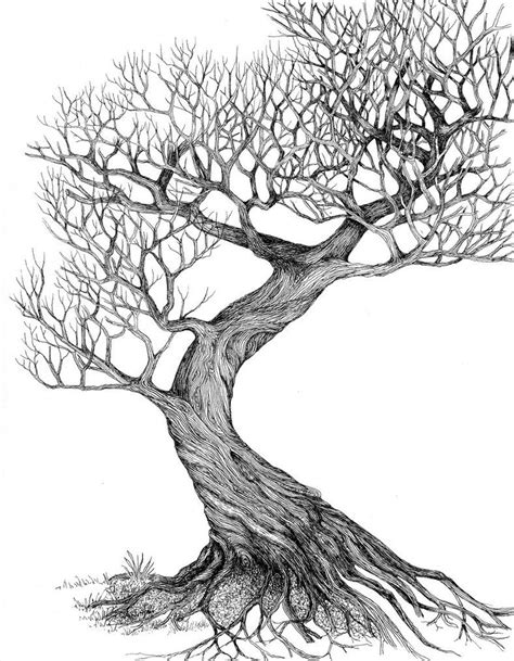 Drawing Trees by Line Drawing Leaves Twisting Tree By Ellfi On