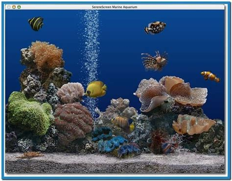wallpaper aquarium mac marine aquarium screensaver mac os x download free